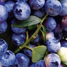 Blueberry Bush: Blue Pearl  (Large)