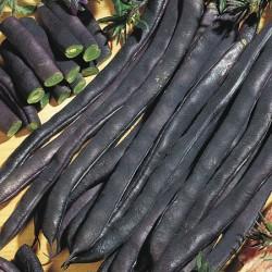 French Bean Empress Plants x12