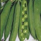 Pea & Bean Bonanza