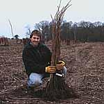 Raspberry Plants - Long Cane Malling Minerva