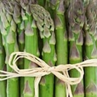 Asparagus Crown Plants - Gijnlim