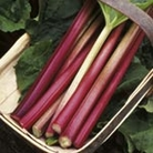 Rhubarb Plants - Stockbridge Arrow