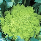 Calabrese Romanesco Seeds