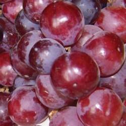 Grape Flame Vine