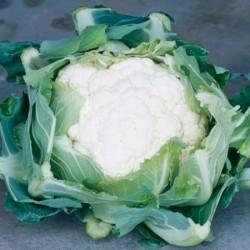 Cauliflower Clapton Seeds (Gro-sure)