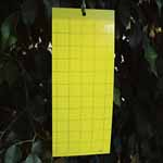 Yellow Sticky Fly Traps