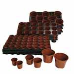 Growing On Pots & Trays (Medium)