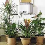 Oasis Indoor Self-Watering System