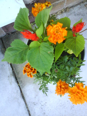 Garden_pics_056