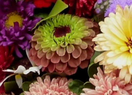 2a._cut_flowersp1050498