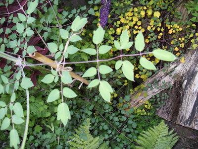 Flower_leaf