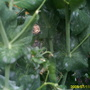 Garden_pics_143