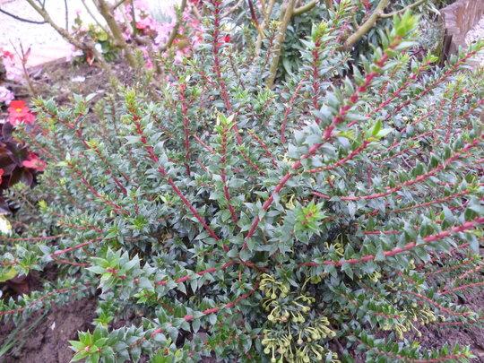 Plants_2_007