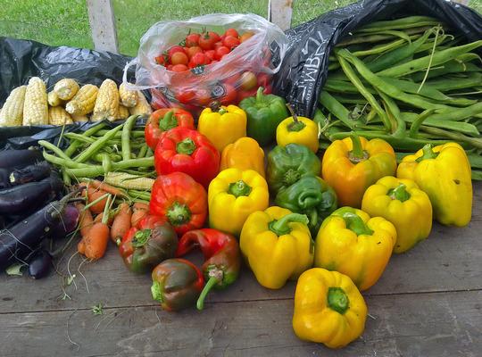 Harvest_1_