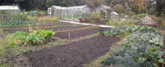 Allotment_panorama_copy_copy_web