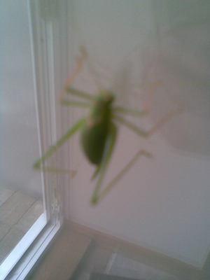 Green_bug2