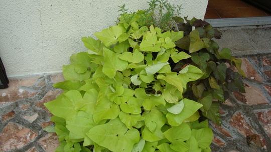 Foliage_plants_001