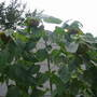 Sunflowers_003
