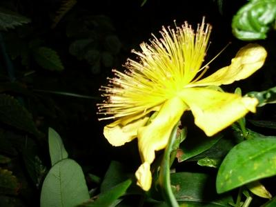Mystery_flower