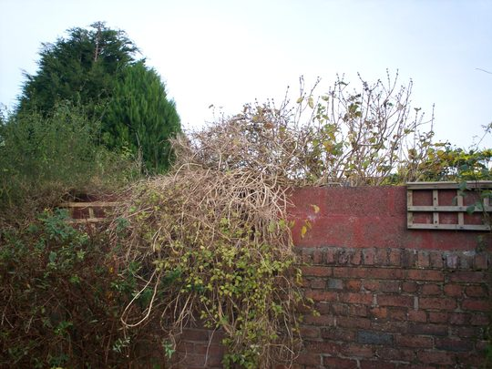 Plant_id_11_001