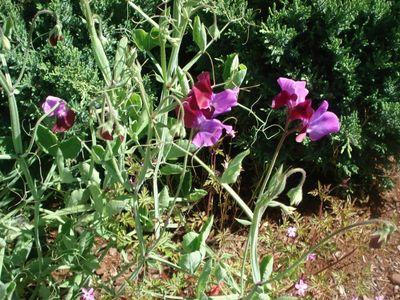 Butterfly_flowers2