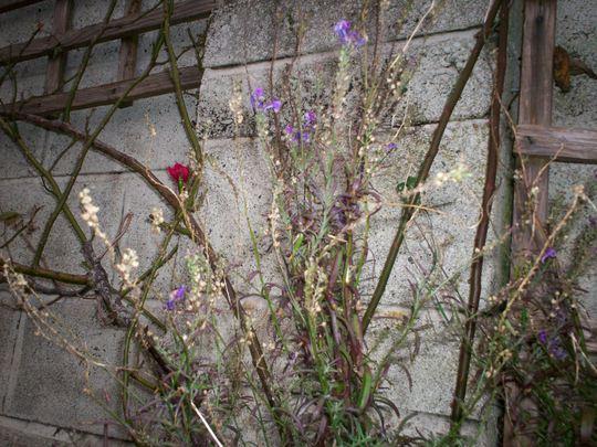 Plant_id_13_001