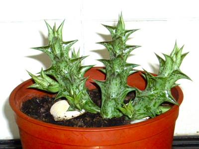 Plant_plant_a