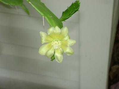 Cactus_101c