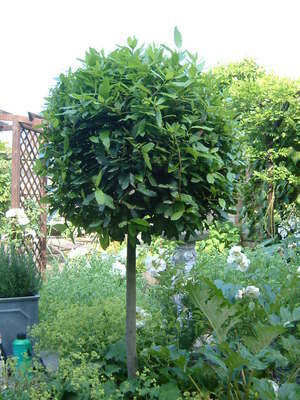 Garden_1-07-08__3_