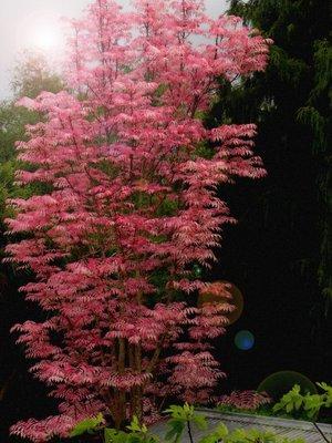 Stunning_tree