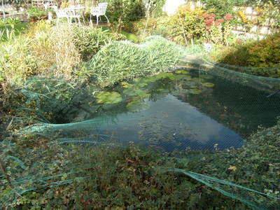 The_pond