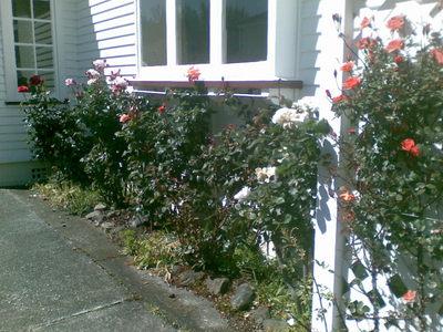Roses_on_1st_november