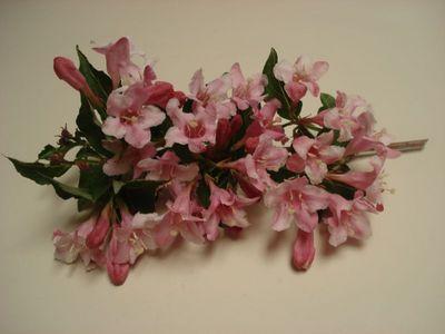 Pink_flower_bush