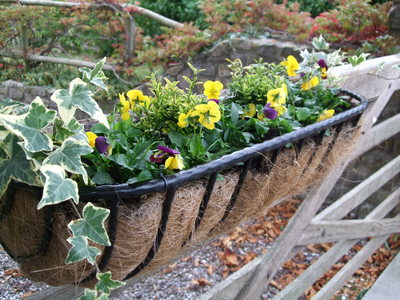 Gate_trough_with_added_violas