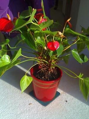 Diana_s_mystery_plant