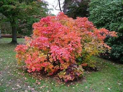 Nice_shrub