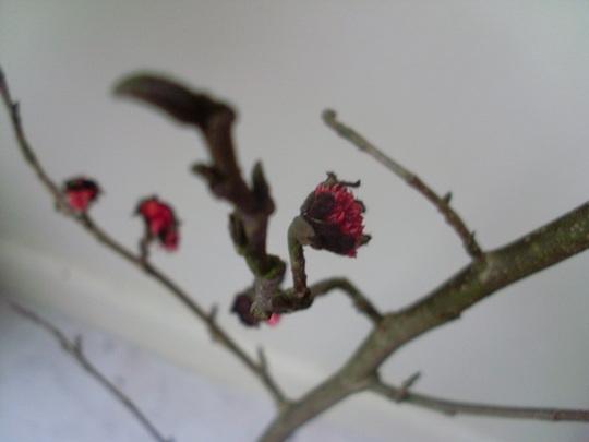 Tree_twig_014