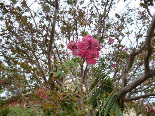Australia_march_aprl_1913_039