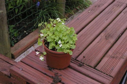 Ebay_plants_019