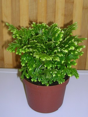 Z.mystery_plant_2