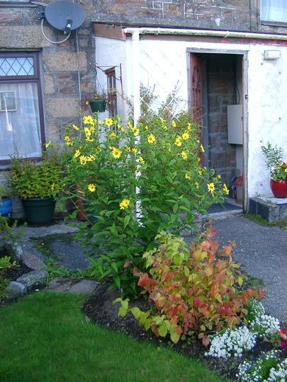 Garden_september_2013_001
