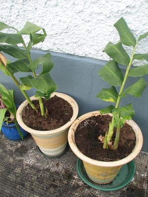 Plant_3_june_08