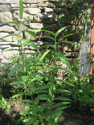 Plant_1_june_08