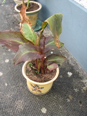 Plant_2_june_08