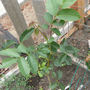 Green_plant_-