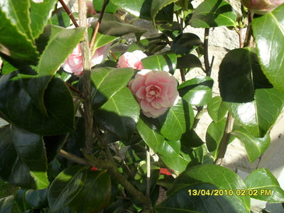 Plant_1