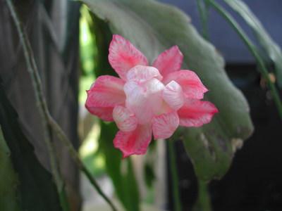 Flower3625_001