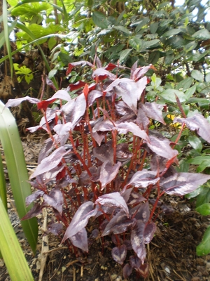 Rainwashed_garden_25.4.10_004