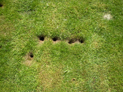 vole holes in yard these holes in my lawn