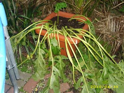 Garden_photos_30th_april_003